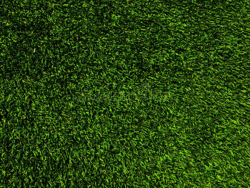 Green grass texture use as natural background. Wallpaper for design artwork royalty free stock photos