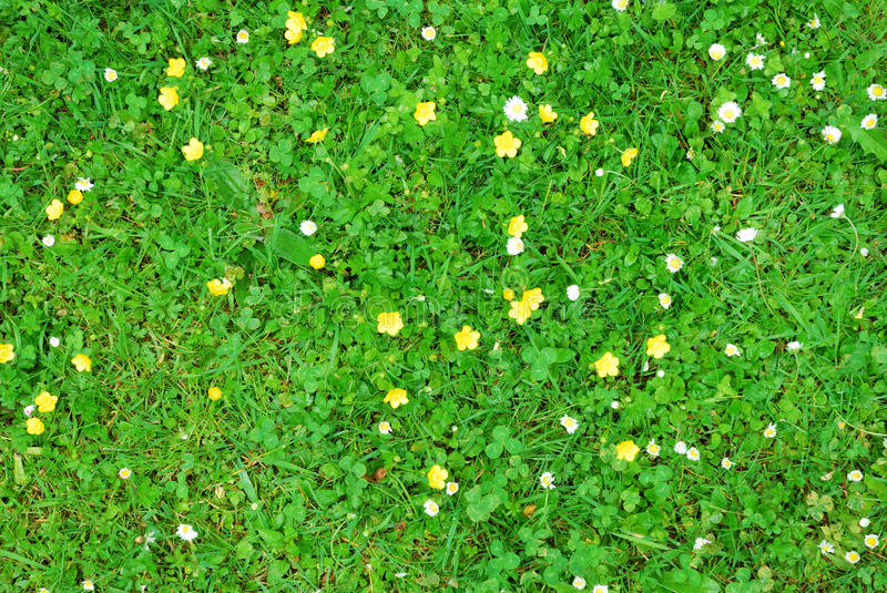 Hand Painted Clover Texture