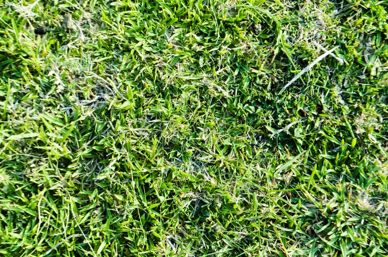 Green grass textured background and pattern from golf course stock photos