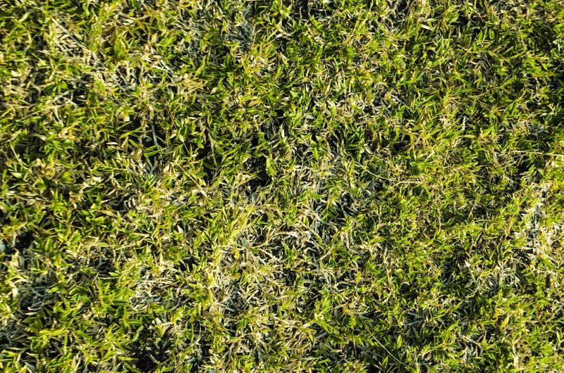 Green grass textured background and pattern from golf course stock image