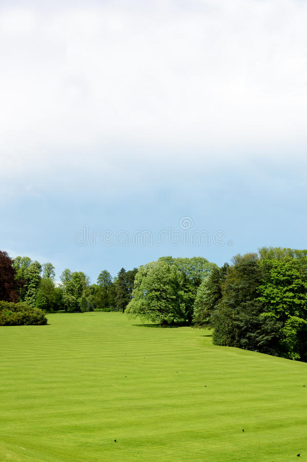 Green grass and trees stock photo