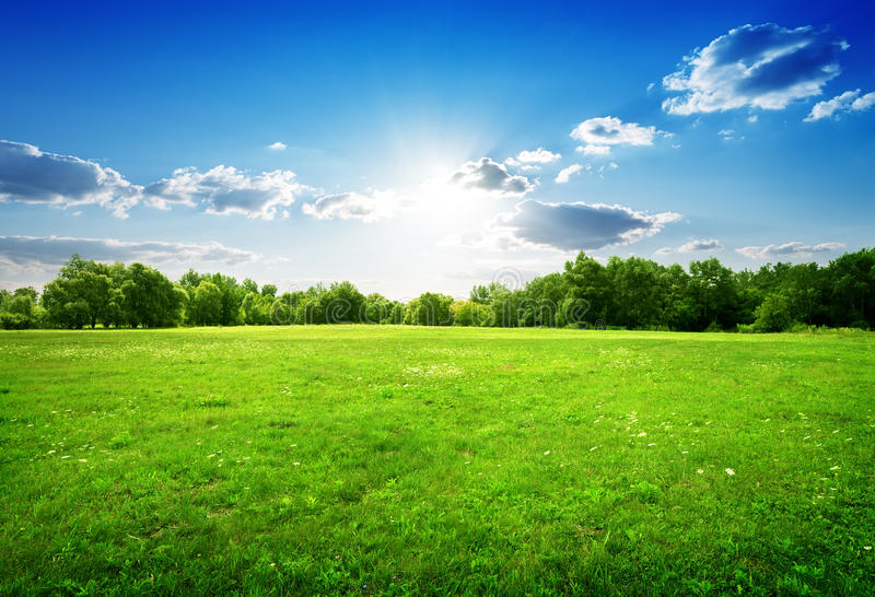 Green grass and trees stock image