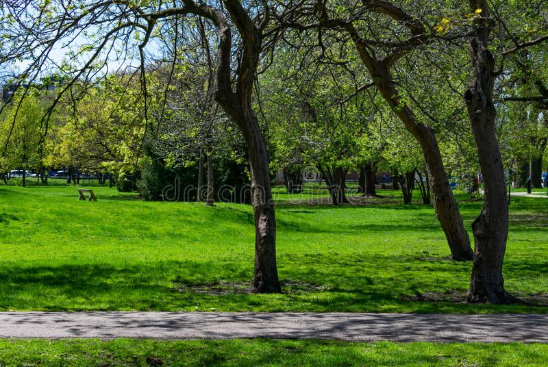 Green Grass and Trees at Welles Park in Lincoln Square Chicago. A path in front of green grass and trees at Welles Park in the Lincoln Square neighborhood of royalty free stock image