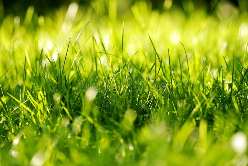 Download Green Grass Tuft stock image. Image of closeup, spring - 7590393