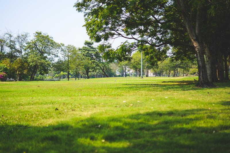 Green grass under Big tree in the public park.Nature landscape with sky background.Beautiful meadow royalty free stock image