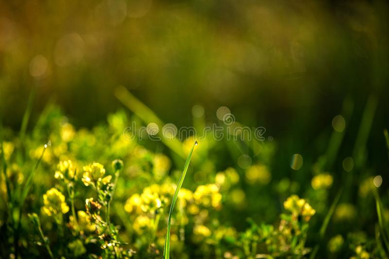 Green grass under sun. Weinberg / Germany 17.08.2019 royalty free stock image