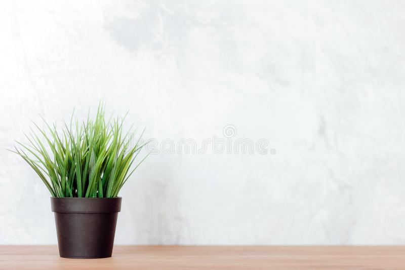 Green grass in a vase on the table, Green plant in a vase on the wooden table stock image