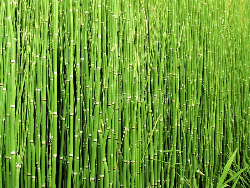 Green, Grass, Vegetation, Grass Family stock image