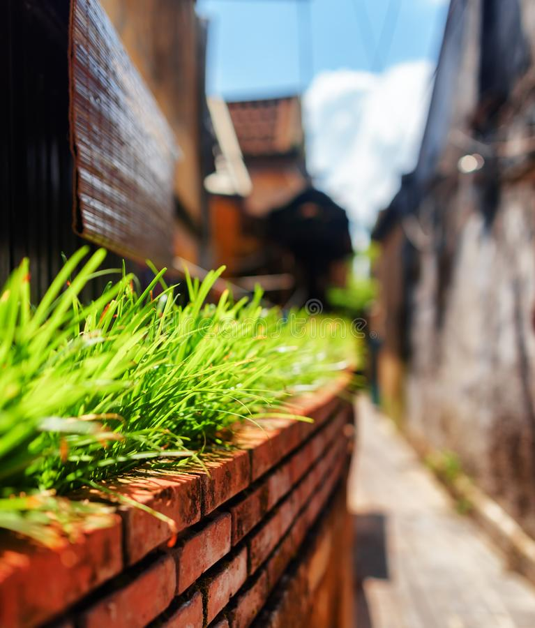 Green grass beside wall of house on narrow street. In old town. Shallow depth of field stock photos