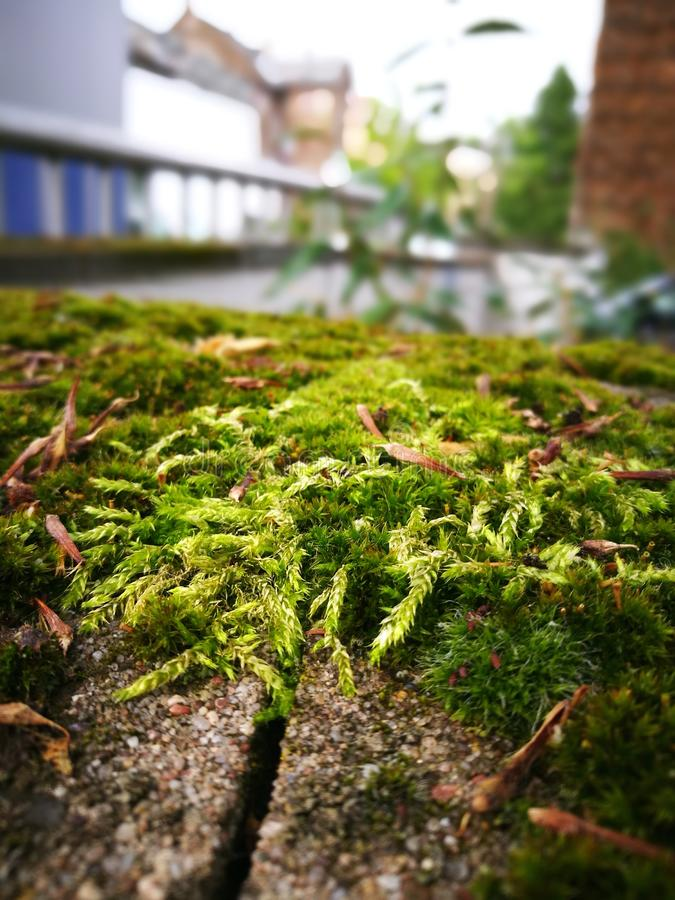 Green grass wall royalty free stock photography