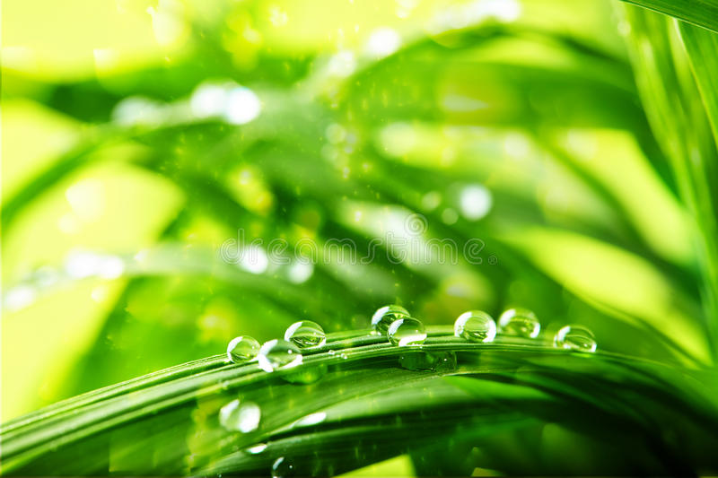 Green grass, water drops stock images