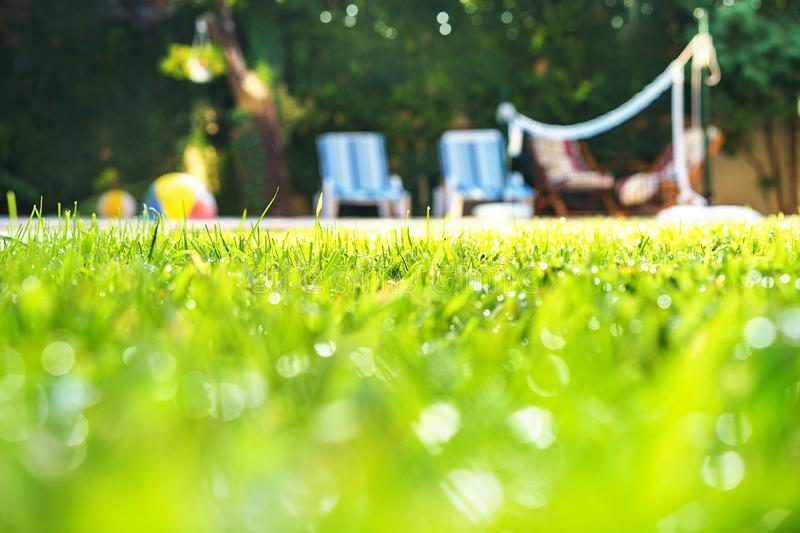 Green grass with water drops and green bokeh background on the yard with swimming pool and deck chairs for friends at garden party royalty free stock photography