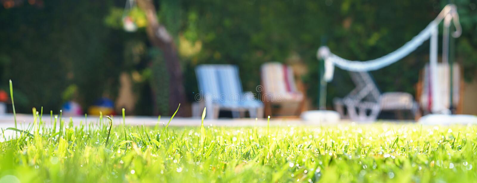 Green grass with water drops and green bokeh background on the yard with swimming pool and deck chairs for friends at garden party stock photography