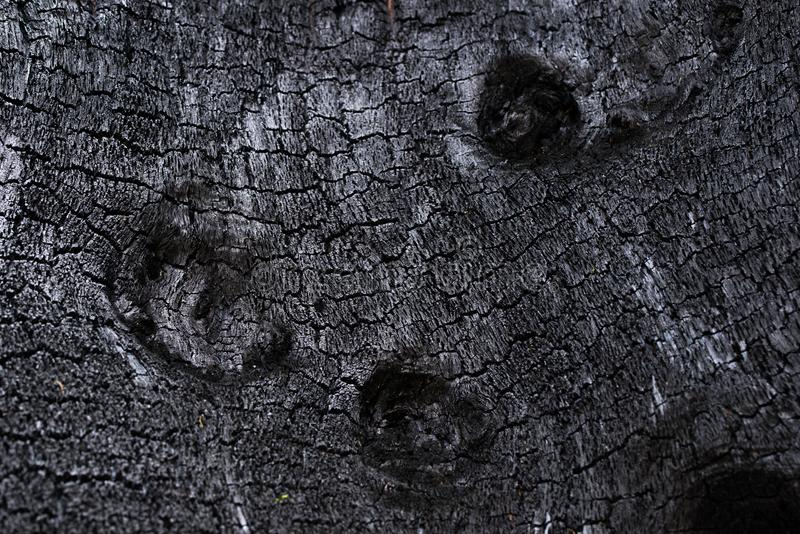 Green Grass Weed, Sunlight and Water at the Countryside. Texture of a burned tree showing it´s wooden surface looking like black coal with white reflections royalty free stock photo