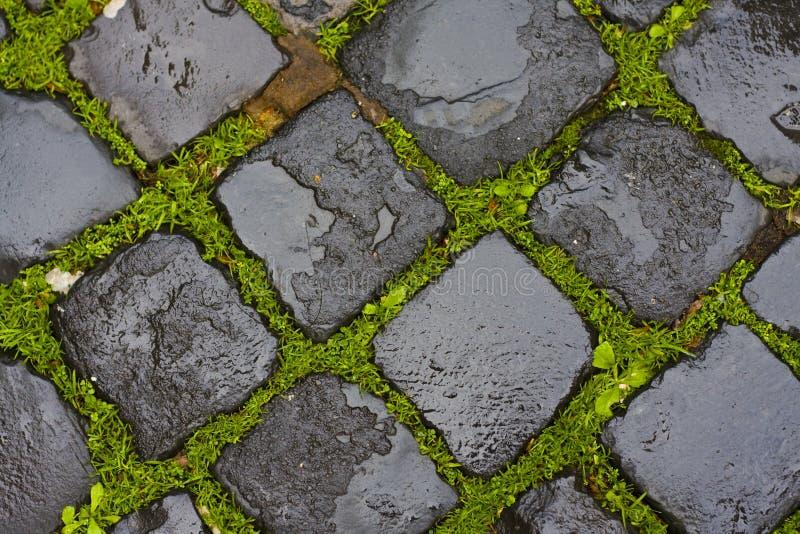 Download Green Grass Between Wet Cobblestones Stock Photo - Image: 12565430
