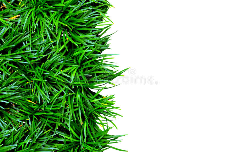 Download Green Grass Stock Photo - Image: 38833695