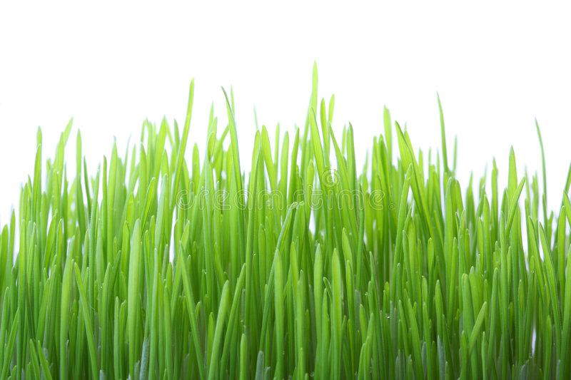 Download Green Grass On White Background Stock Image - Image: 7973871
