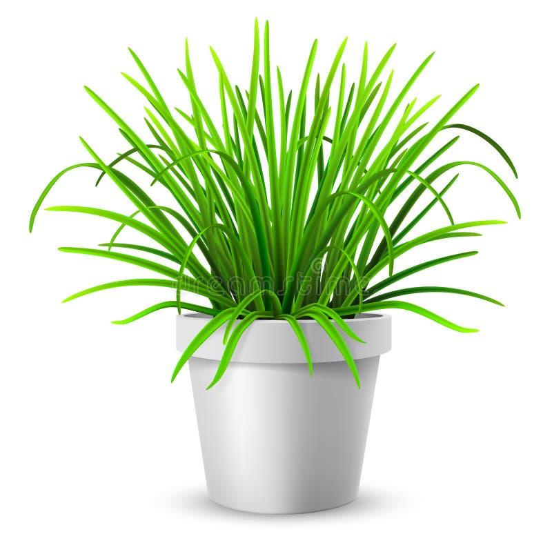 Green grass in white flowerpot vector illustration