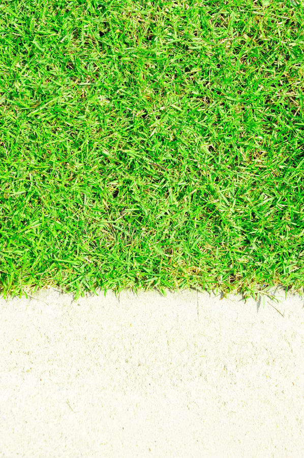 Download Green grass and white sand stock image. Image of close - 25333681