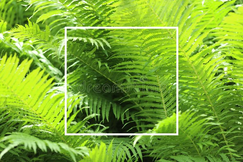 Green grass with white square frame. Ready background for the text. royalty free stock photo
