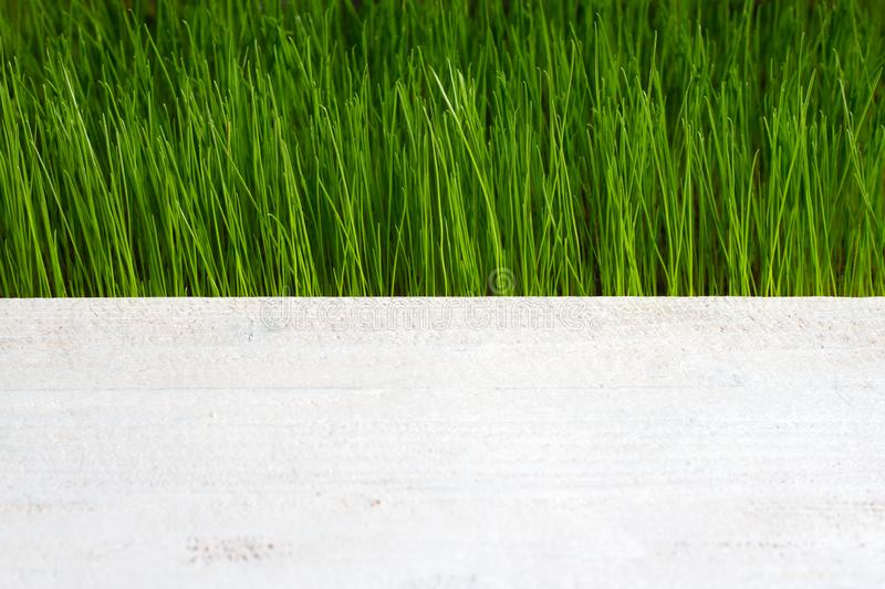 Green grass and wooden plank abstract spring background. Closeup stock images