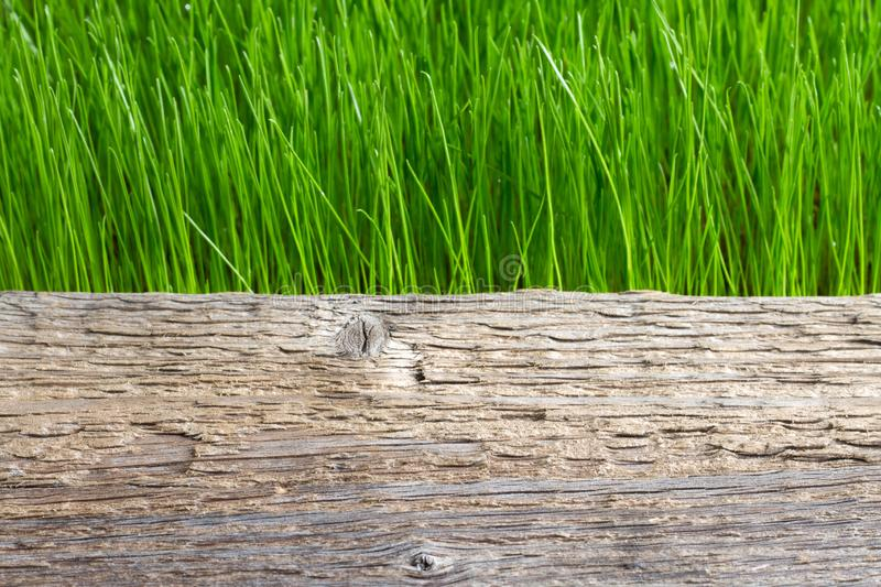 Green grass and wooden plank abstract spring background. Closeup royalty free stock image