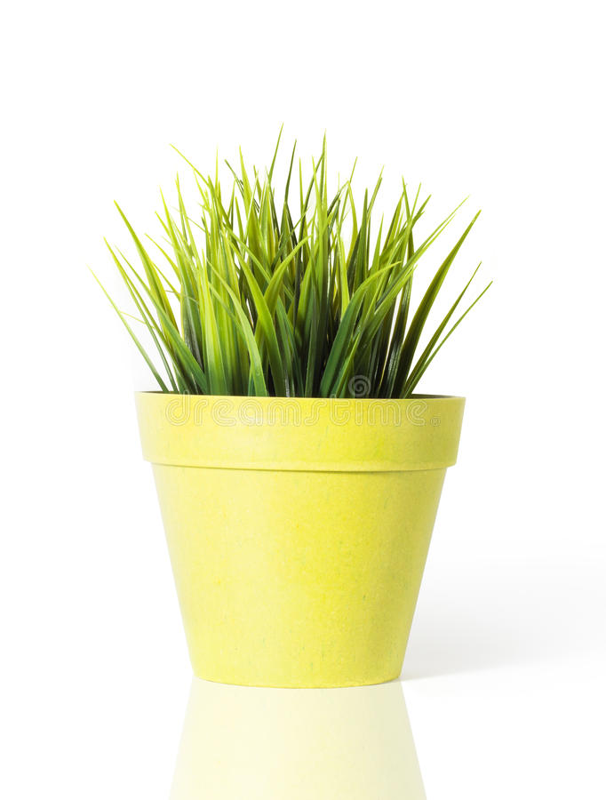 Green grass in a yellow flower pot isolated on white background download green grass in a yellow flower pot isolated on white background stock photo image mightylinksfo