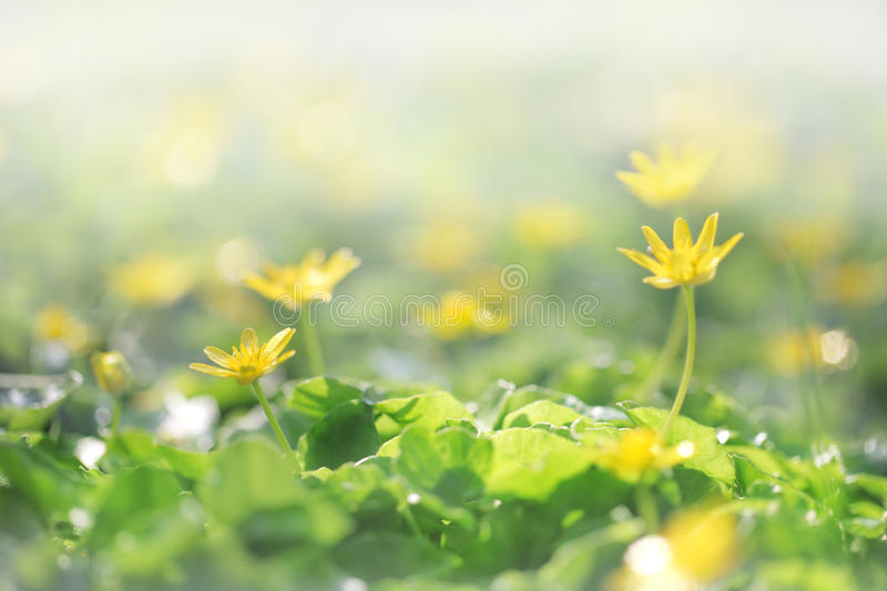 Green grass with yellow flowers