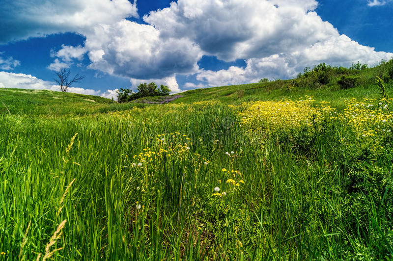 Green grass with yellow flowers stock photos