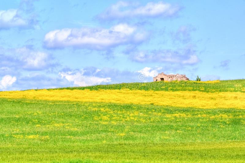 Green grass and yellow flowers field landscape under blue sky and clouds stock photos