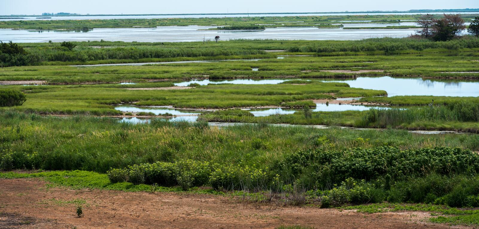 Green Grasses and Blue Waters. A panoramic view of the green grasses and blue waters of the Marshlands royalty free stock images