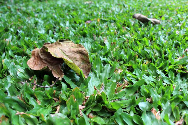 Green grasses and dry leaves in the garden. Calm royalty free stock photo