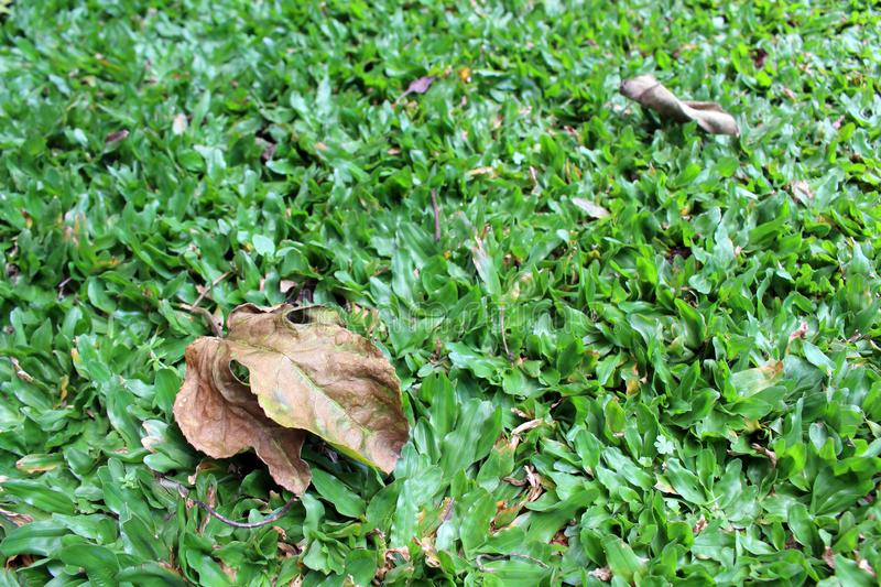 Green grasses and dry leaves in the garden. Calm royalty free stock images
