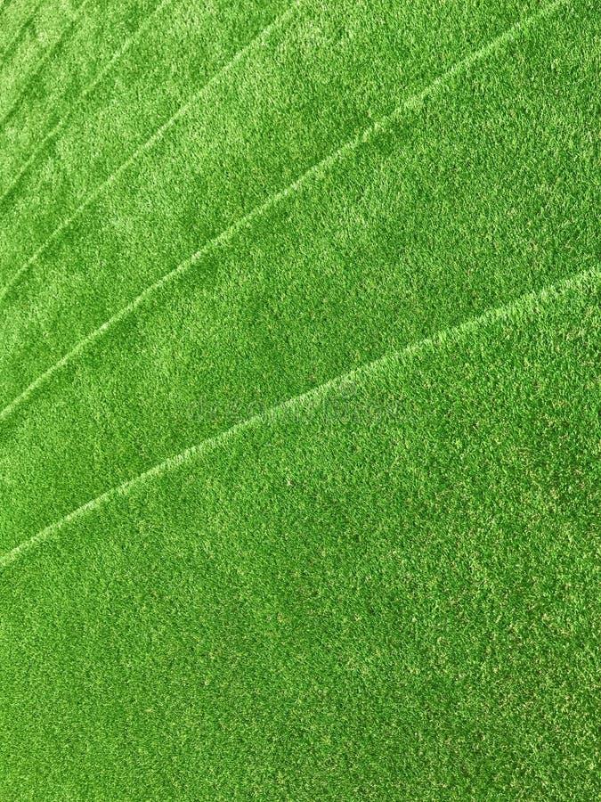 Green grasses stairway interior garden. Green grasses stairway interior design stock image
