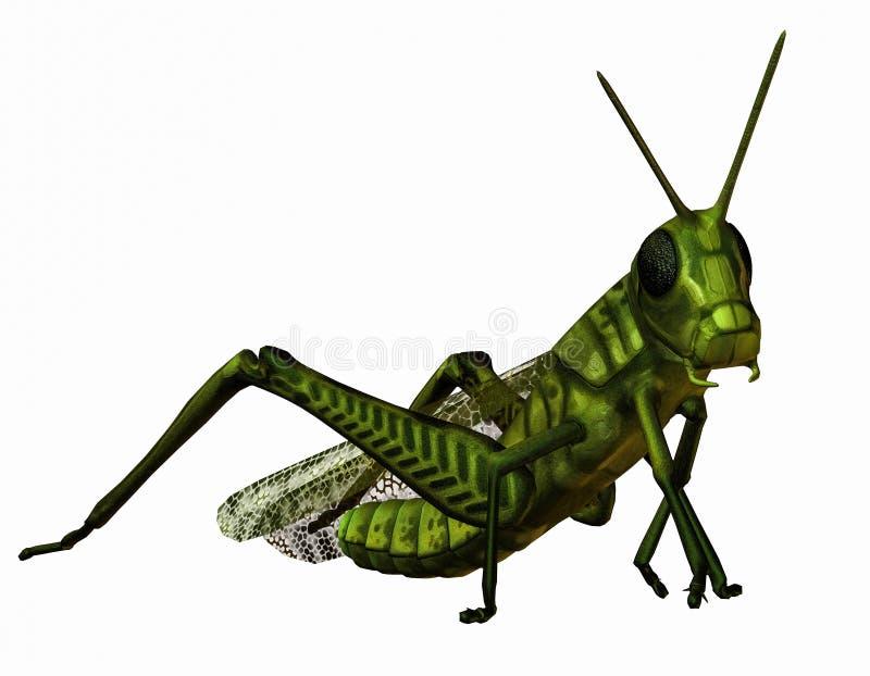 Green grasshopper. 3D rendering of a green grasshopper stock illustration