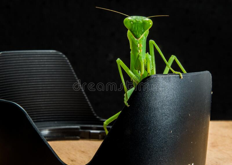 Green Grasshopper on Black Metal royalty free stock photo