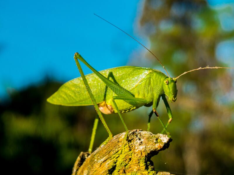 Green Grasshopper During Day Time Free Public Domain Cc0 Image