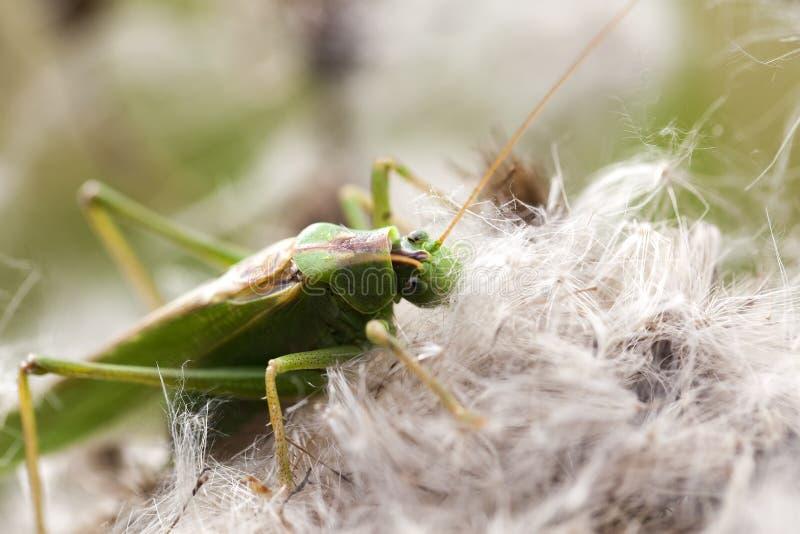 Download Green Grasshopper - Food Intake Stock Photo - Image: 33359706