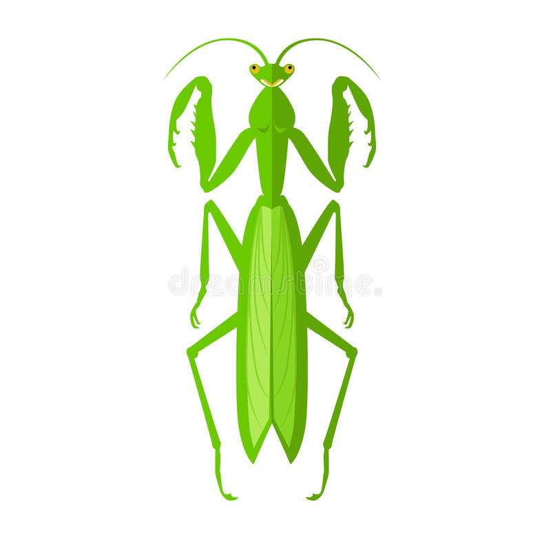 Green Grasshopper Icon. Nature green cartoon locust and cute flat grasshopper icon. Wild creature antenna invertebrate cute grasshopper agricultural zoo large stock illustration