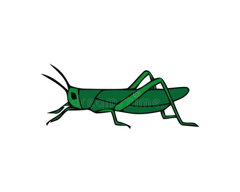 Green grasshopper isolated on a white background. Locusts. Pests of agriculture. Vector illustration vector illustration