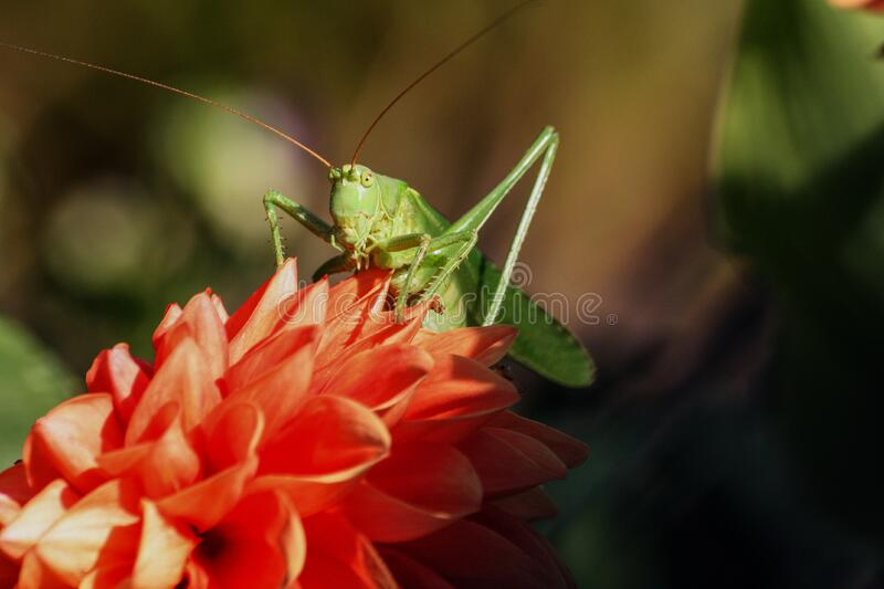 Green Grasshopper On Red Flower During Daytime Free Public Domain Cc0 Image