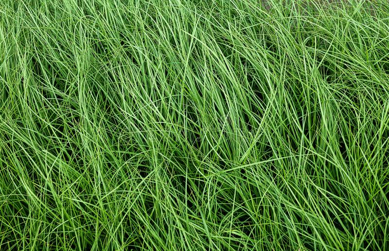Green grassland with outdoor low lighting. Green grassland with outdoor sun low lighting royalty free stock image