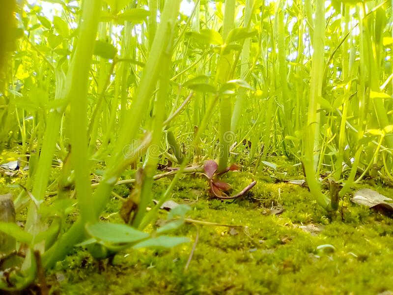 Green grassy background royalty free stock image