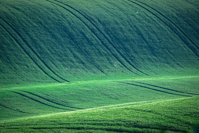 Green and gray spring field abstract background royalty free stock photo