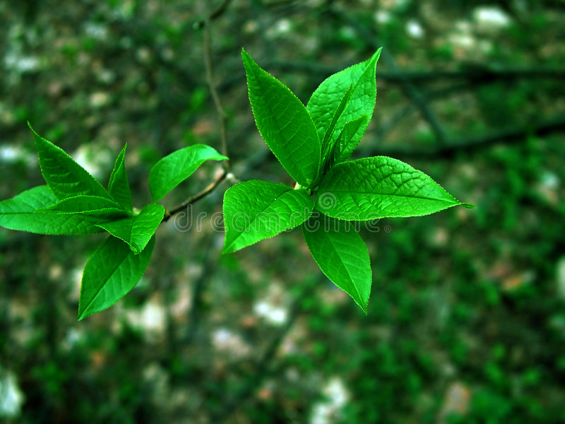 Download Green on green stock photo. Image of line, herb, nature - 113136