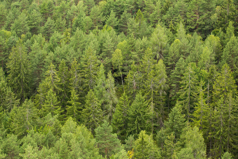 Green Green Forest Trees royalty free stock image