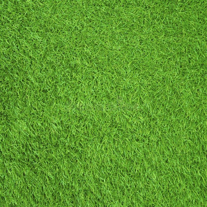 Green gress. Fallen leaves on green gress stock image