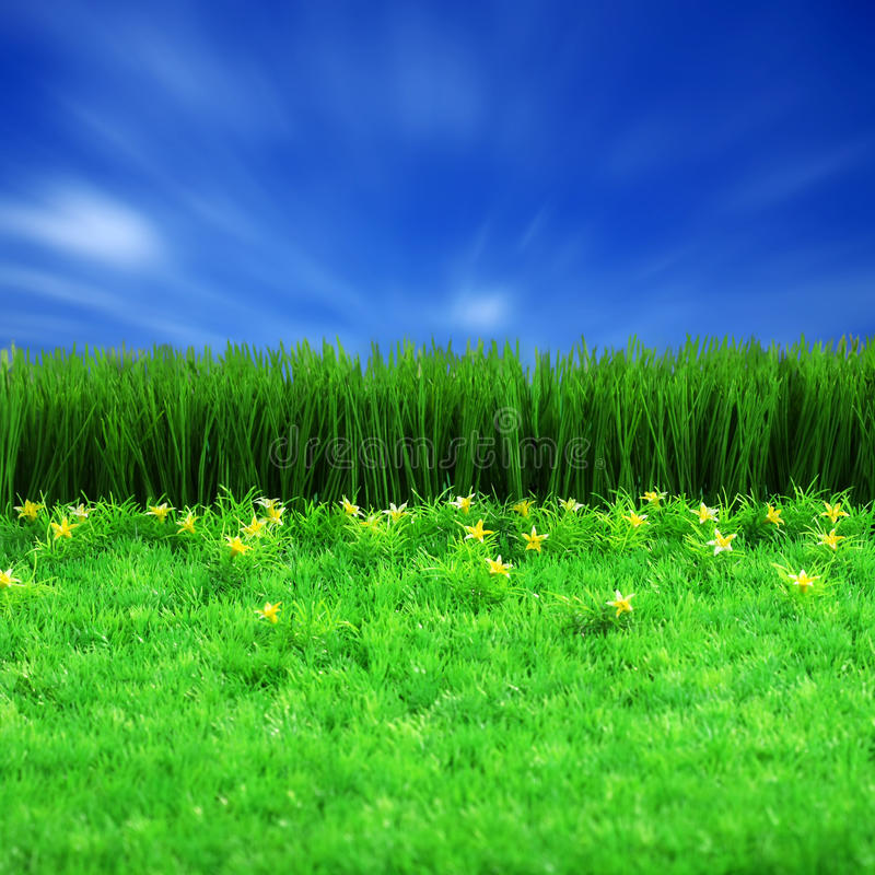 Green gress and blue sky. Background stock image