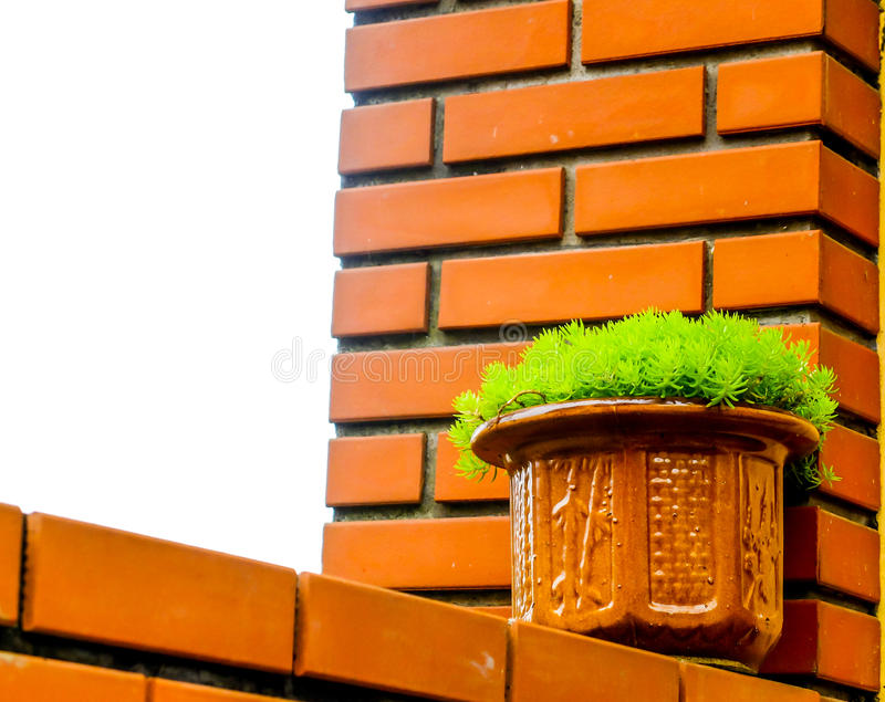 Green gress in ceramic pot on the wall. The green gress in ceramic pot on the wall stock images