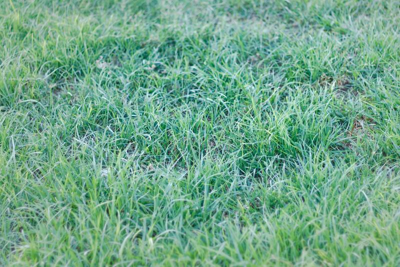 Green gress in the morning time. Green wet grass in the morning time. Pattern nature. Wallpaper stock photo